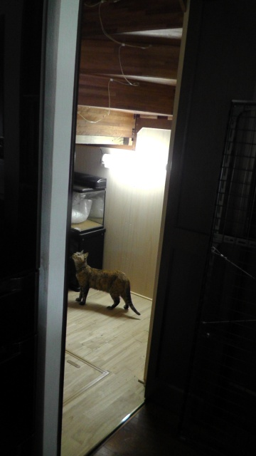 納戸の中身を出すと、さっそく猫が侵入