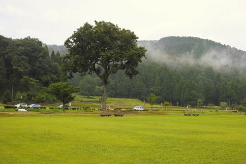 7大木と芝.jpg