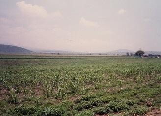 メキシコの畑