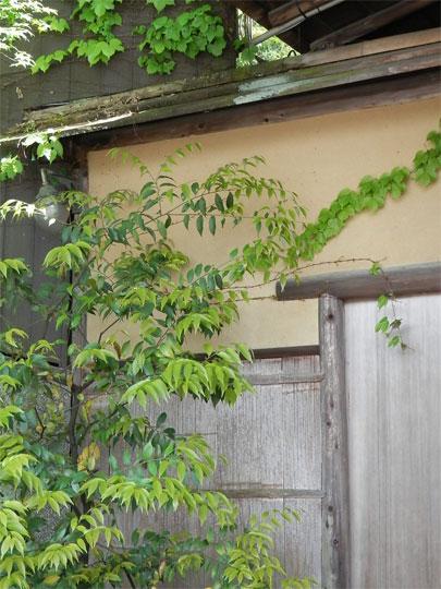 kyoto2014050414.jpg