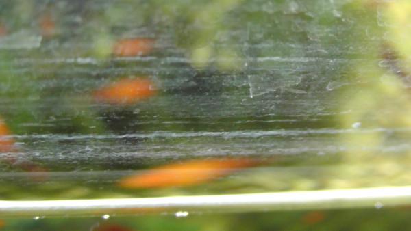 ウロコが付いた水槽のガラス