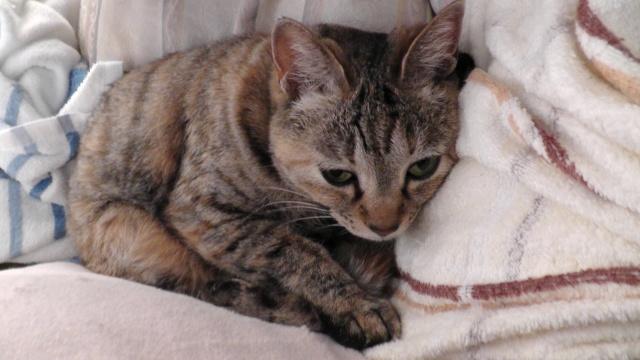 ネコ 猫 ねこ キジトラ 寝ている猫