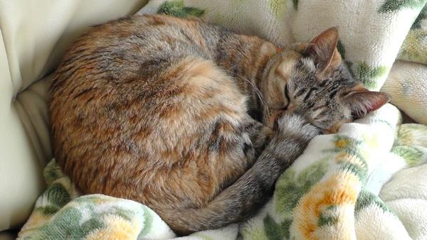 毛並みがボサボサした猫