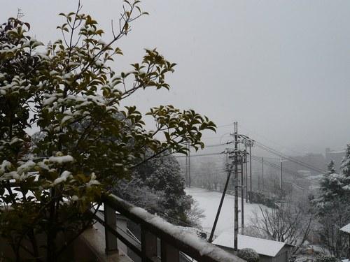 1雪景色5004.jpg