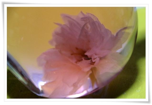 吉野山-29 お酒の中の桜 16.4.12