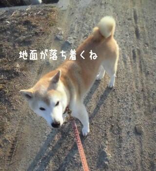 0608夕田んぼ4.jpg