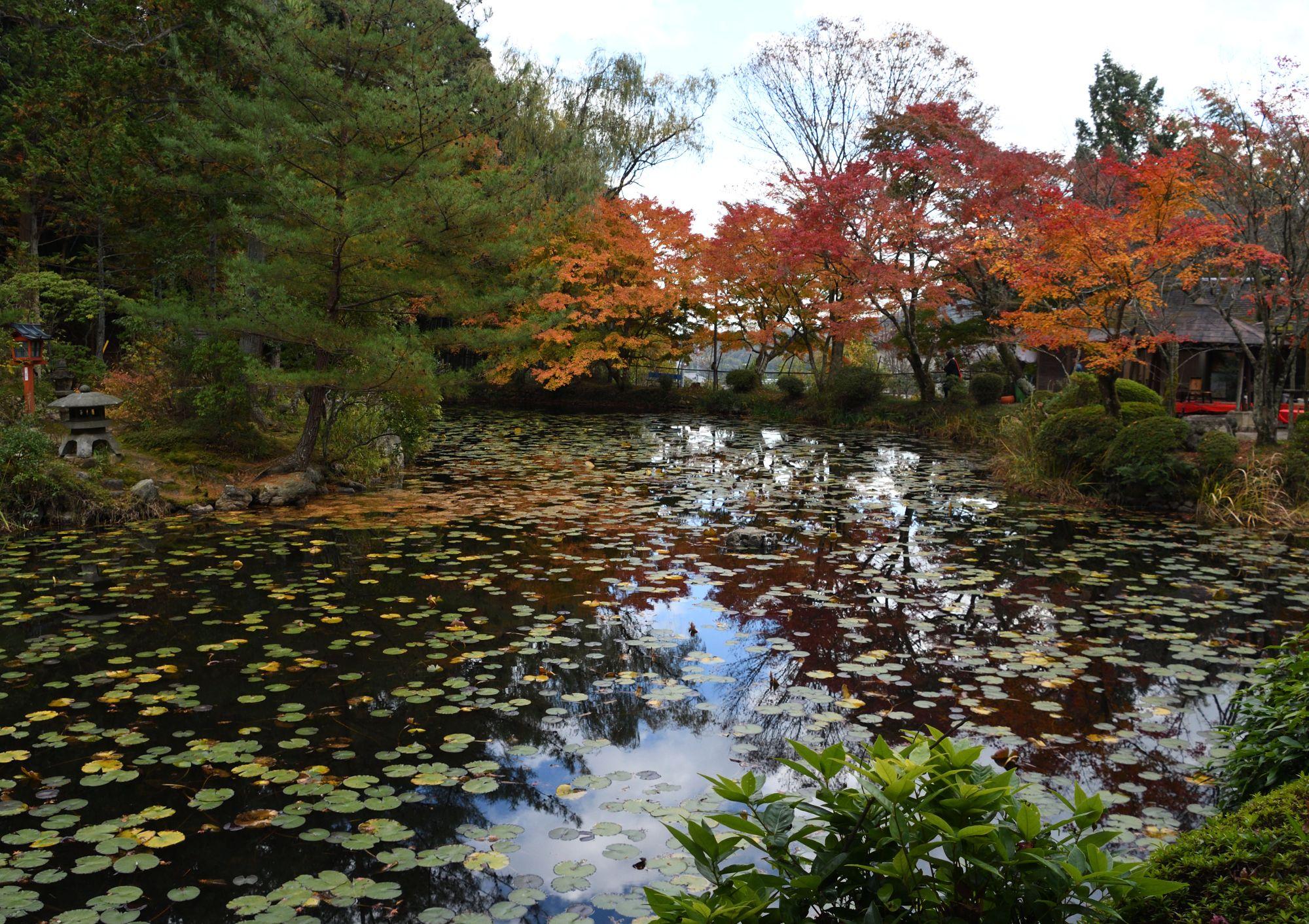 紅葉の京都探訪6(大原野神社の鯉沢の池周辺) | 南風の ...