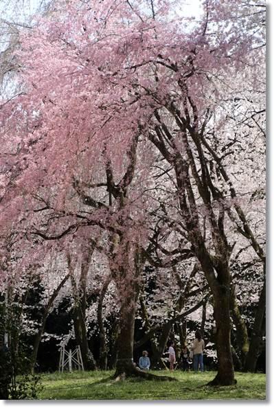 樹木公園-74 16.4.9