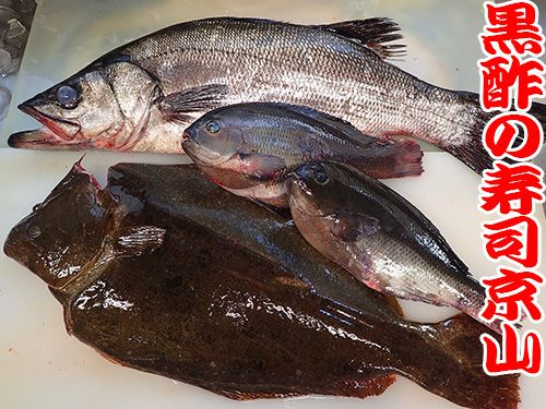 江東区 亀戸 天然地魚の寿司