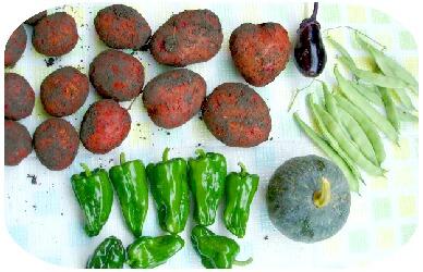 本日の収穫・・・モロッコ豆
