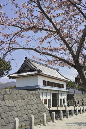 17伊達桜2.jpg