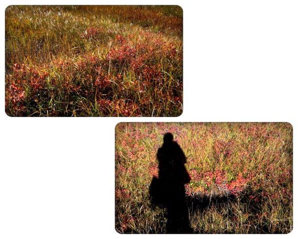 栂池自然園-15 草紅葉と私の影 15.10.2