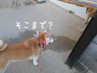 0713トムちゃん3.jpg
