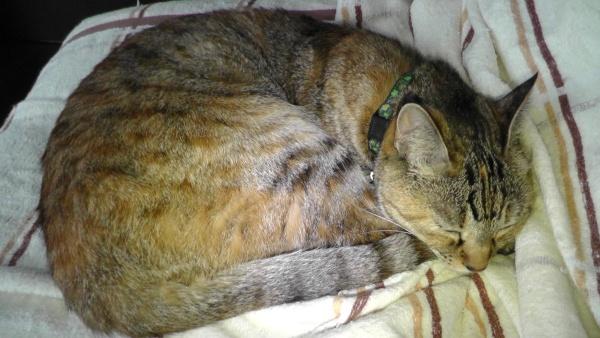 ソファカバーの上に寝る猫
