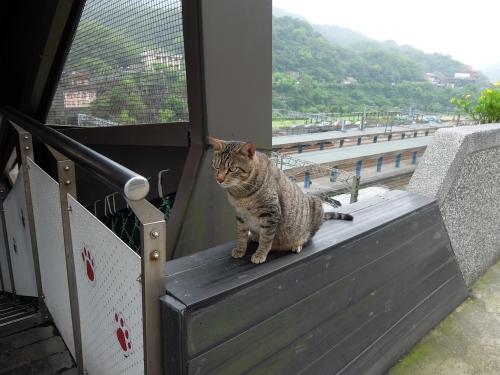 侯? Houtong 台北 台湾 猫村