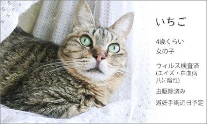 ichigo0702a (1).jpg