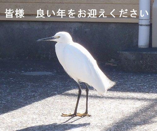 20121230TOP 白鷺