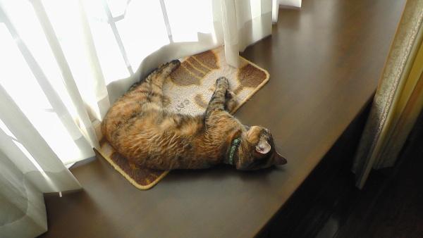 死んでいる猫