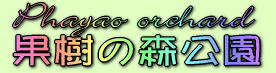 phayaoorchard1.jpg