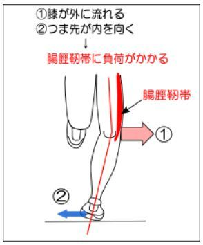 脛 靭帯 腸