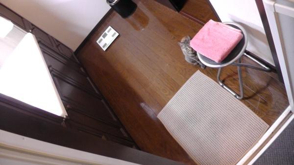 バスルームから脱衣所に出なくても体を拭くタオルが取れるようになる