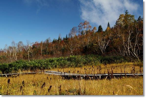 栂池自然園-17 15.10.2