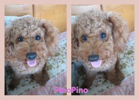 PinoPino2014後期.jpg