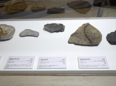 恐竜展2017巨大化の謎にせまる21 植物化石