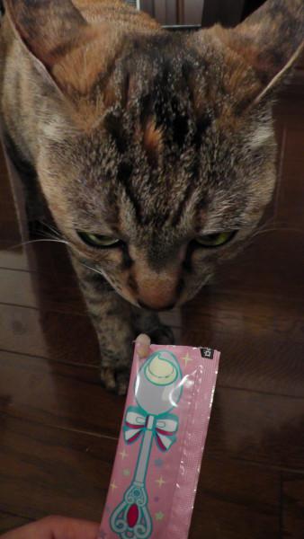 ぺろリッチ キャネット ペットライン 猫