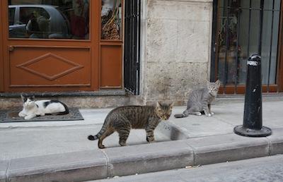 3匹の猫.jpg