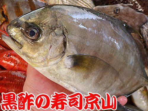 クロヒラアジ 寿司 出前 未利用魚