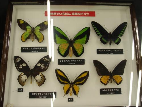特別展示室の標本
