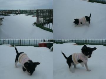 二度目の雪だ~