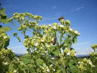 青空とミツバチ