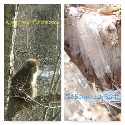 お猿と巨大霜柱