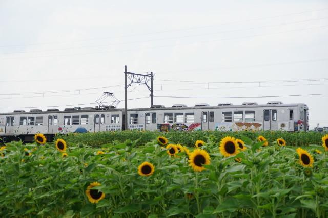 向日葵咲く 弘南鉄道 弘南線6