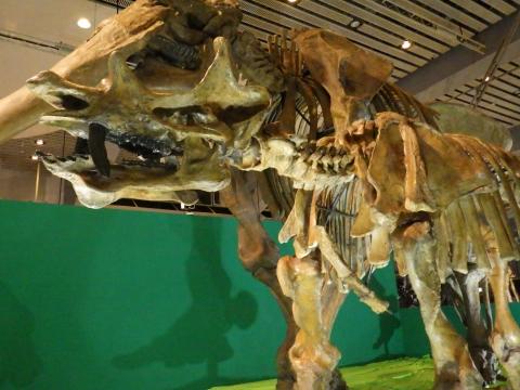 恐竜展2017巨大化の謎にせまる33 ウインタテリウムの全身骨格