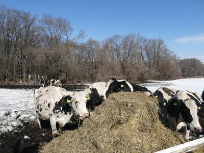 牛さんも気持ち良さそう^