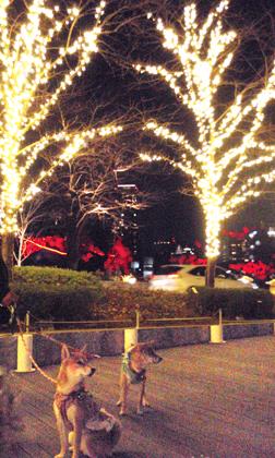 20121216ミッドタウン赤い光