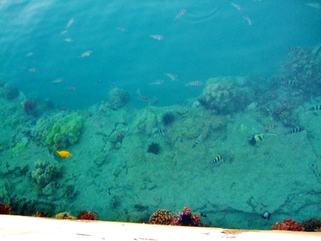 ハワイ カラフル フィッシュ 熱帯魚