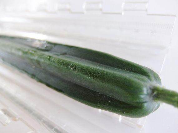 ベランダ菜園 プランター 野菜 きゅうり キュウリ デコきゅう 星 ハート