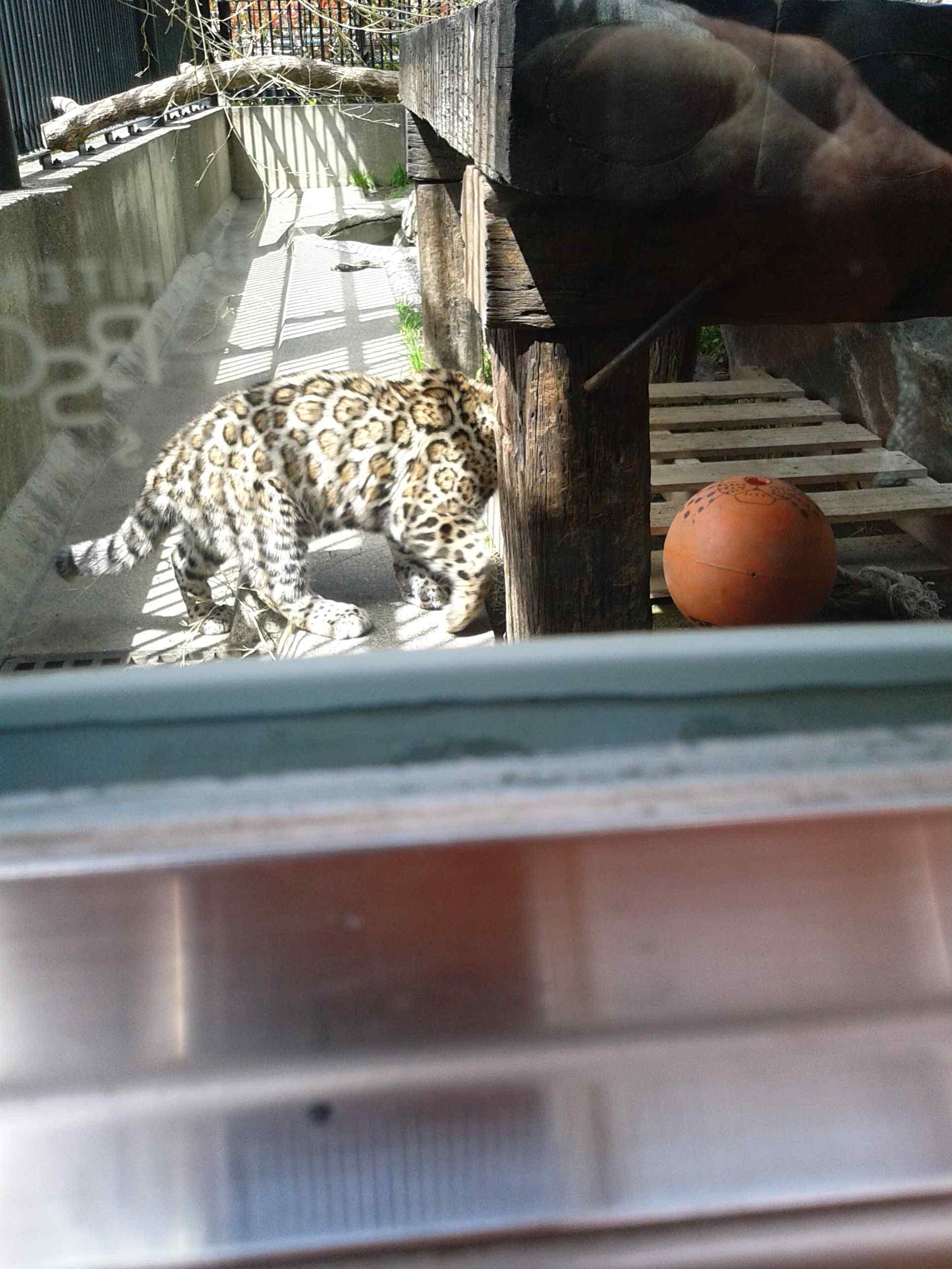ジャガーの赤ちゃん