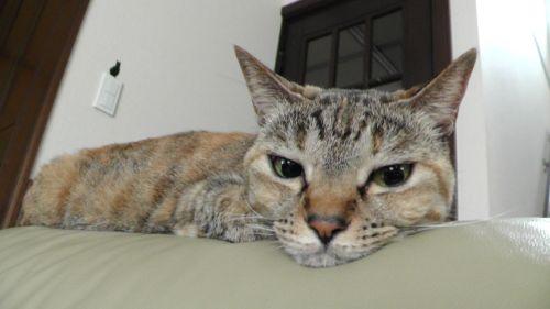 CAT 猫 ネコ ねこ キジトラ