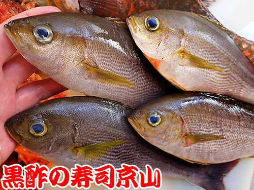 寿司 出前 江戸川区 西瑞江