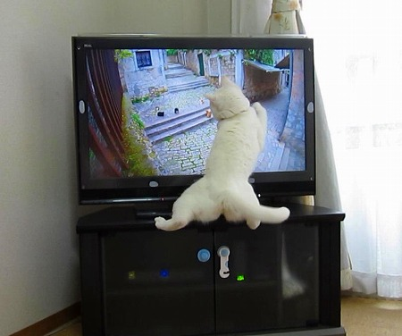 TVの中の猫に飛びかかる.jpg