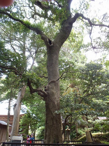 20130526 なんじゃもんじゃの樹