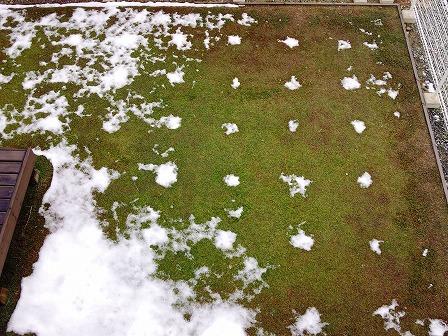 雪が少ないのでクラピアが復活しました1