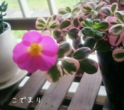 rblog-20170723175013-00.jpg