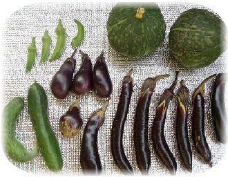 2012.9.12 野菜収穫