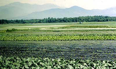 信州大学農場の圃場